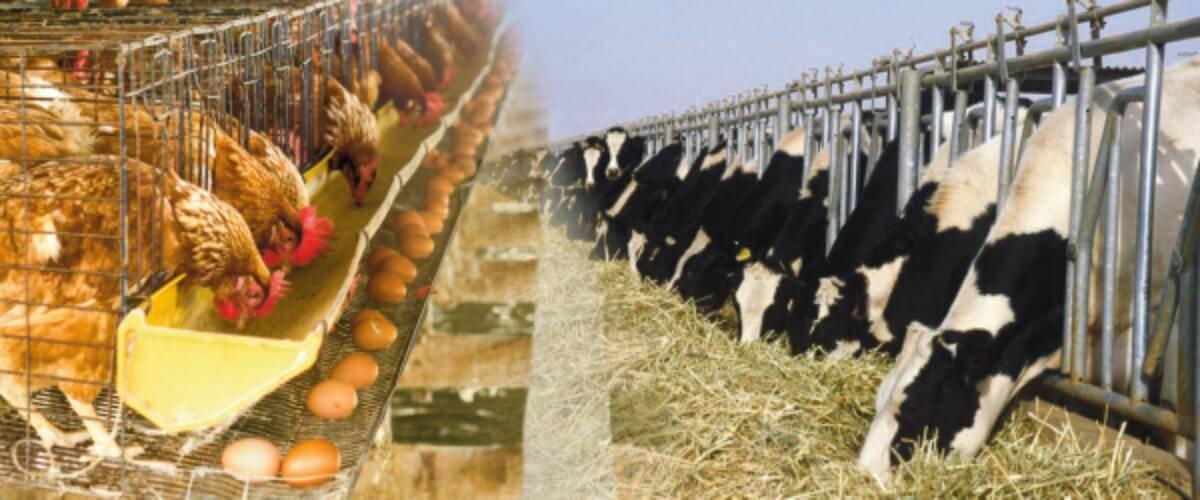 Animal Health Products/ Veterinary