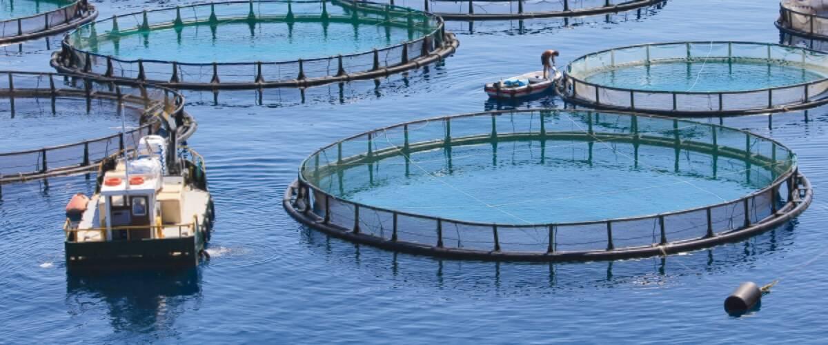 Aquaculture & Equipment/Supplies